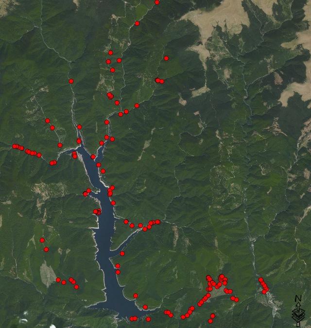 Bombina variegata zona lacului Vidraru